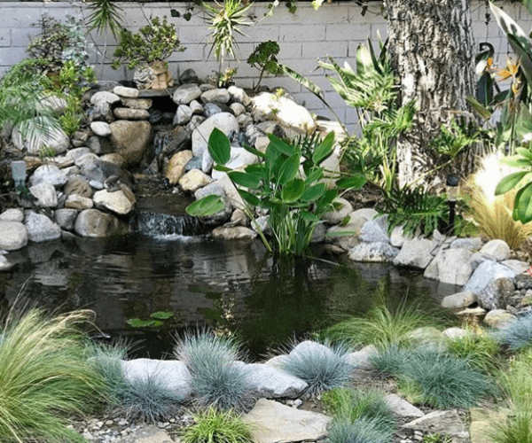 Ecosystem-pond-Cypess-California-1.png
