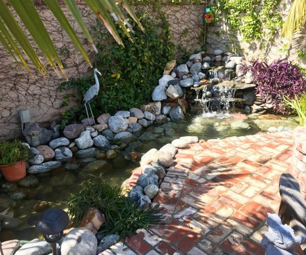 Ecosystem-pond-patio-1.jpeg