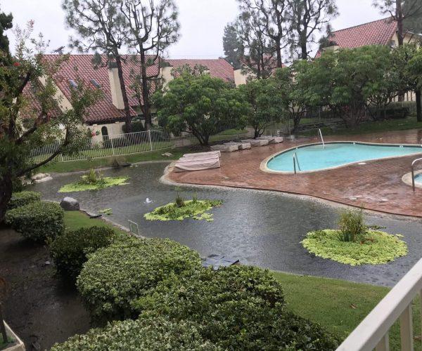 Pond-Commercial-2.jpg