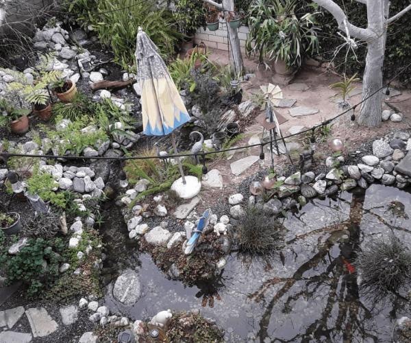 Pond-stream-backyard.png