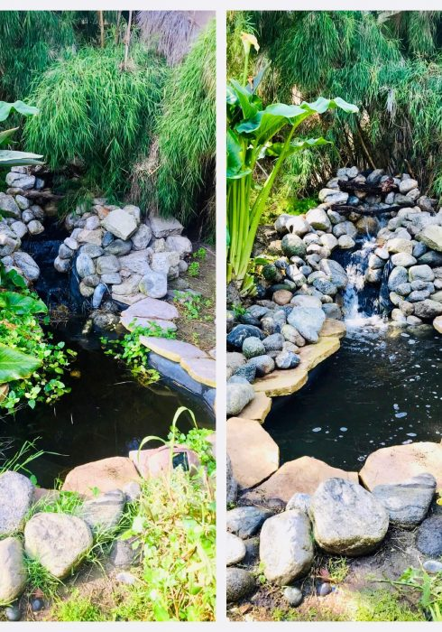 pond-before-after-16-1.jpeg